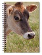 Jersey Cow Portrait Spiral Notebook