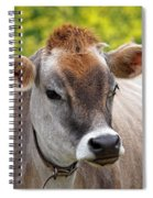 Jersey Cow With Attitude - Square Spiral Notebook