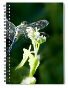 Jeweled Wings Spiral Notebook