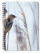 jn01 Bearded Reedling Juvenile Spiral Notebook
