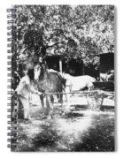 Johnston Horse Wagon Spiral Notebook