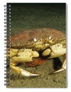 Jonah Crab Spiral Notebook