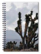 Joshua Tree Forest Ivanpah Valley Spiral Notebook