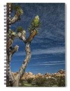 Joshua Tree In Joshua Tree National Park No. 279 Spiral Notebook