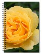 Julia Child Floribunda Rose Spiral Notebook