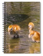 Jump In. The Water Is Fine Spiral Notebook