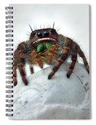 Jumper Spider 2 Spiral Notebook