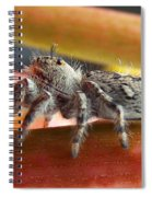Jumper Spider Spiral Notebook