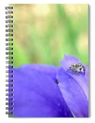 Jumping Spider Spiral Notebook