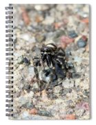 Jumping Spider Face On Spiral Notebook
