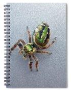 Jumping Spider - Green Salticidae Spiral Notebook