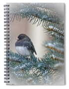 Junco In Pine Spiral Notebook