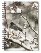 Junco In The Snow Spiral Notebook