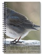 Junco On Board Spiral Notebook
