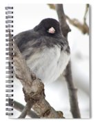 Junco Posing Spiral Notebook