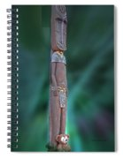Jungle Bear Spiral Notebook