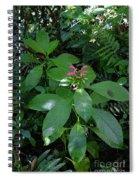 jungle in La Amistad National Park Panama 4 Spiral Notebook