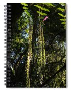 jungle in La Amistad National Park Panama 7 Spiral Notebook
