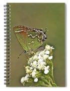 Juniper Or Olive Hairstreak Butterfly - Callophrys Gryneus Spiral Notebook