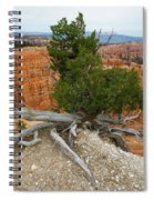 Juniper Tree Clings To The Canyon Edge Spiral Notebook