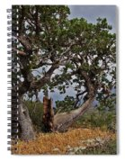 Juniper Tree On The Edge Of The Verde Valley Spiral Notebook