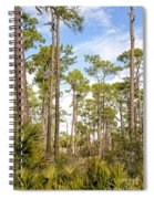 Ancient Looking Florida Forest At Aubudon Corkscrew Swamp Sanctuary Spiral Notebook