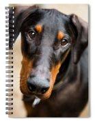 Just A Doberman Spiral Notebook
