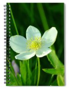 Just A Little White And Yellow Blossom Spiral Notebook