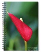 Just A Peek Spiral Notebook