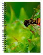 Just Beecause Spiral Notebook