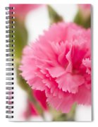 Just Carnations Spiral Notebook