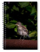 Just Out Of The Nest Spiral Notebook