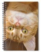 Just Peeking In Spiral Notebook