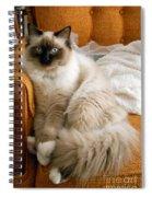 Just Sitting Spiral Notebook