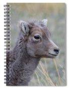 Just Waitin Spiral Notebook
