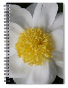 Just White Spiral Notebook