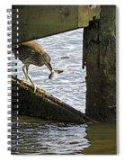 Juvenile Black Crowned Night Heron Spiral Notebook