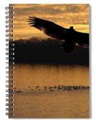 Juvenile Eagle Golden Sunset Spiral Notebook