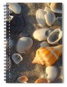 Juvenile Florida Fighting Conch Spiral Notebook