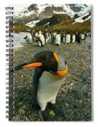 Juvenile King Penguin Spiral Notebook