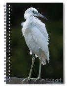 Juvenile Little Blue Heron On Sign Spiral Notebook