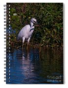 Juvenile Little Blue With Lobster 1 Spiral Notebook