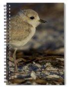 Juvenile Snowy Plover Photo Spiral Notebook