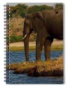 Kalahari Elephants Preparing To Cross Chobe River Spiral Notebook
