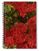 Kalanchoe Flowers Spiral Notebook