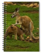 Kangaroo Nursing Its Joey Spiral Notebook