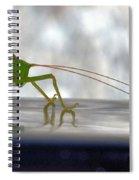 Katydid Reflection Spiral Notebook