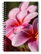 Kaupo Summer Treasure Spiral Notebook