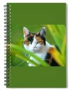Kayla The Kalico  Spiral Notebook