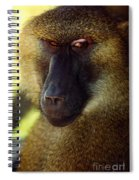 Kc Babboon 2 Spiral Notebook
